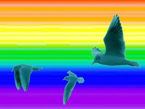 arcobal copia