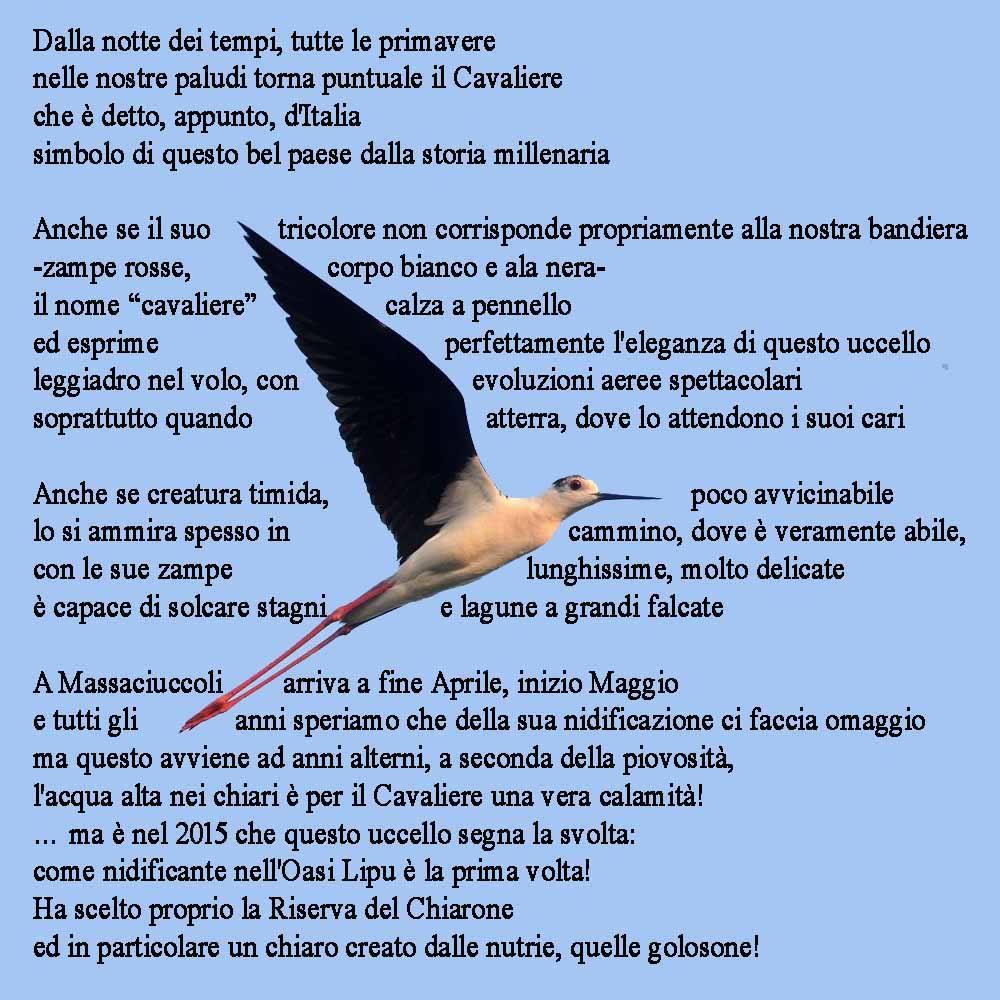 Filastrocca_cavaliere