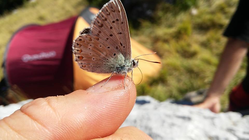 volontari farfalla