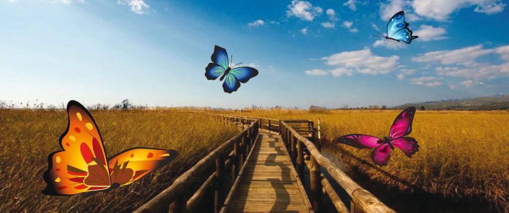 camminamento farfalle_rid