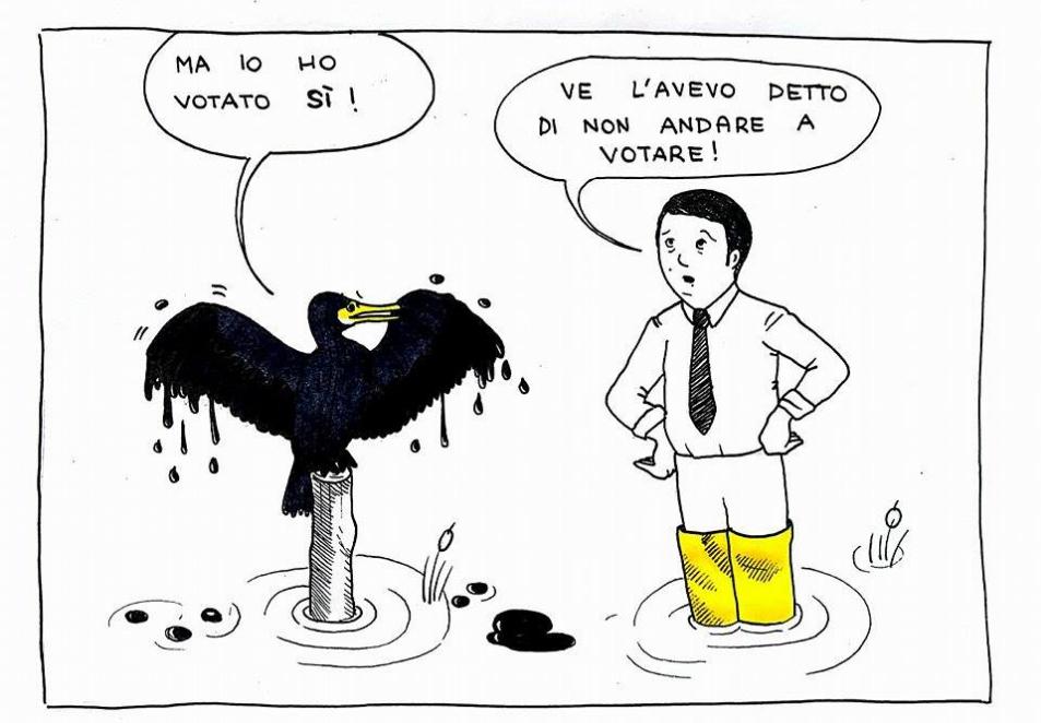 cormoranzo