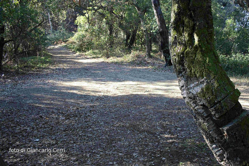 sentiero-delle-sughere_rid