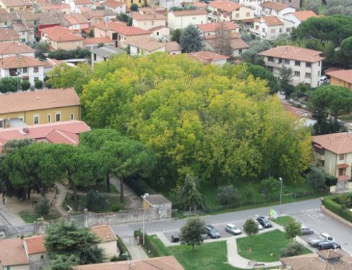 Natura (al) verde in citt